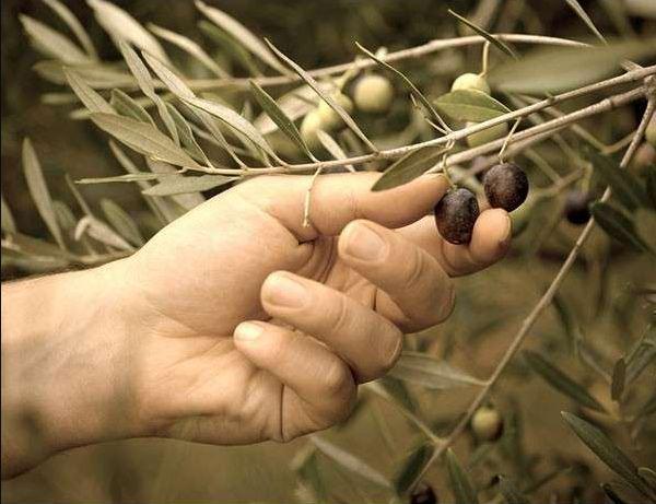 Savon liquide huile d'Olive Bio, sans parfum – 1000ml