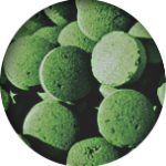 spiruline comprimés naturelle et artisanale cultivée en milieu tropical naturel d'origine. Contrôlées et conforme aux législations françaises