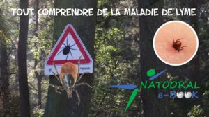 Tout comprendre à la Maladie de Lyme
